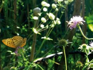 Sommergarten_Insekten_web
